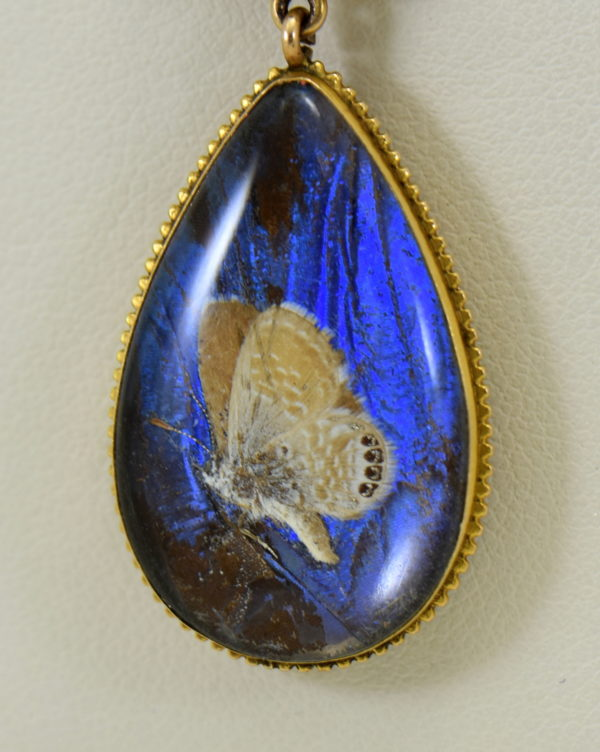 Edwardian Gold insect specimen Pendant with butterfly wing under crystal with moth 3.JPG