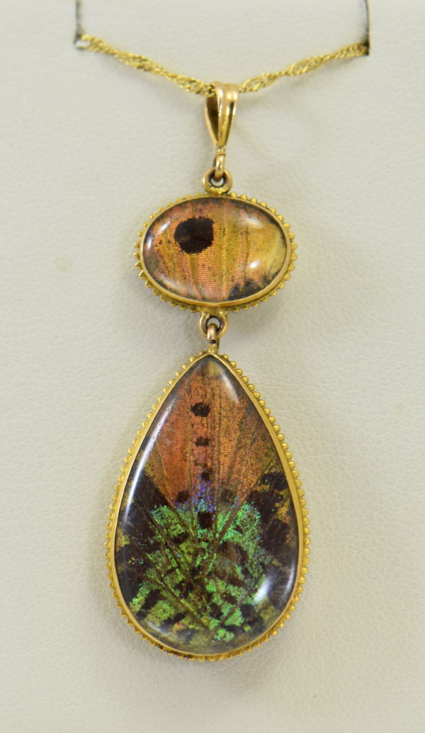 Edwardian Gold insect specimen Pendant with butterfly wing under crystal with moth 6.JPG