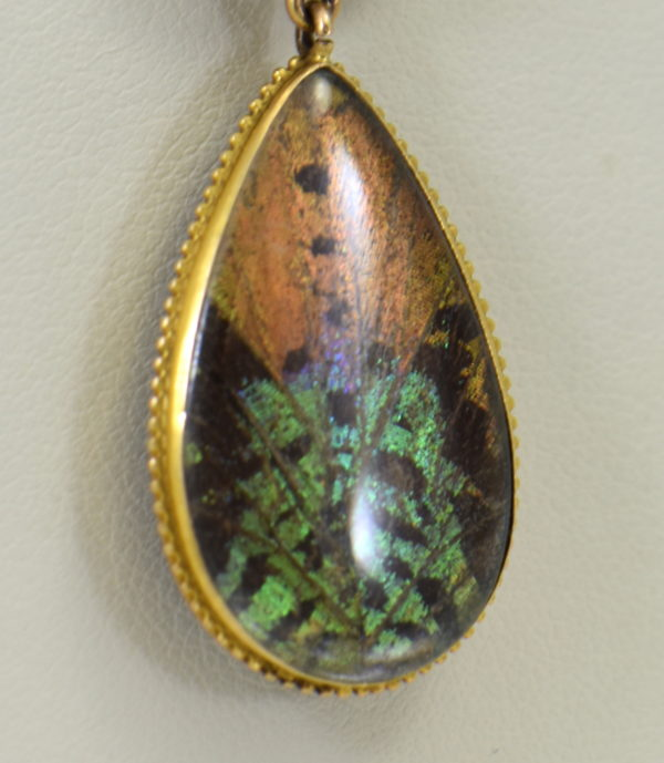 Edwardian Gold insect specimen Pendant with butterfly wing under crystal with moth 7.JPG